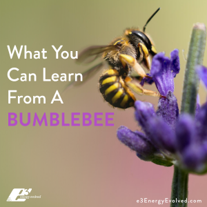 bumblebee, faith, mindset, belief, psychology, mind-body wellness, wellness, mind-body psychology